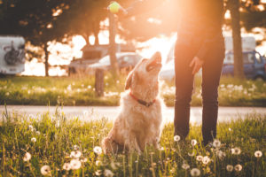 D'Angelo Dog Park near Luxury South Loop Apartments for Rent