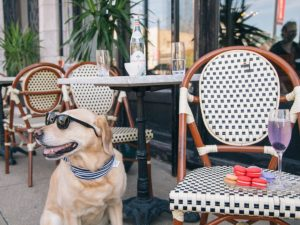 Dog Friendly Summertime Hot Spots Near River North